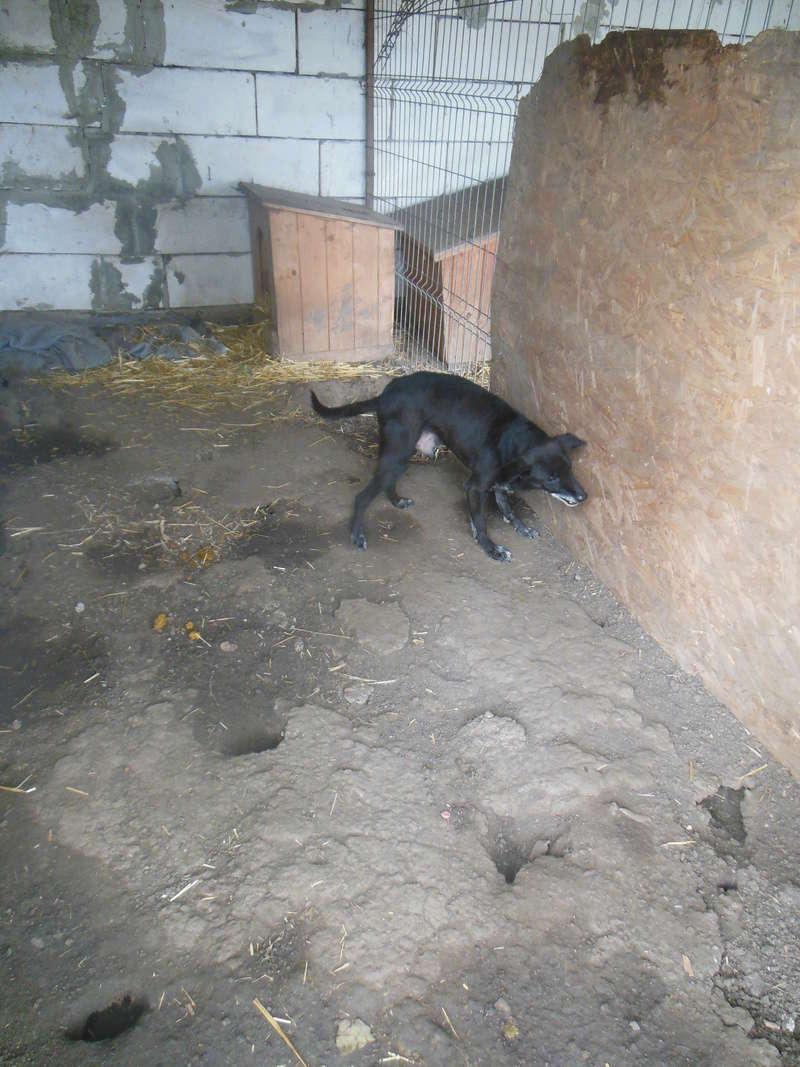 BLACHI, ratier, né en 2004 PARRAINE PAR LAIRO - FB - LBC- SOS -SC- AS - Page 6 Blachi12