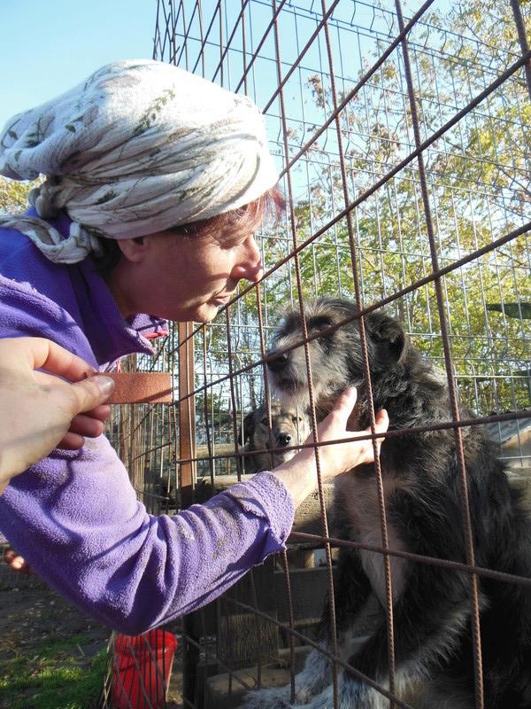 NOYA, née en 2010, En FA dans le 94 - type griffon - Parrainée par Yemtsi-R-SOS-FB-LBC-SC-AS-30MA - Page 4 Dscn0333