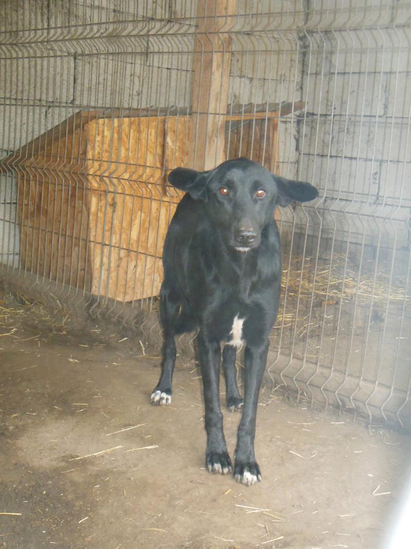HOPE, née en 2008, croisé labrador parrainée par Nathalie Gamblin- R - VV-SC-SOS-FB - LBC - - Page 2 Hope_112