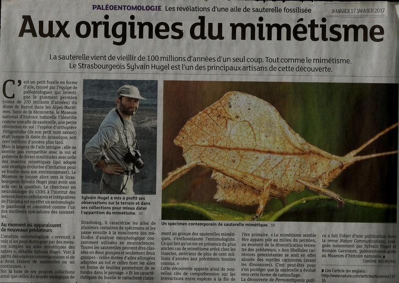 la plus vieille sauterelle découverte Scan0010