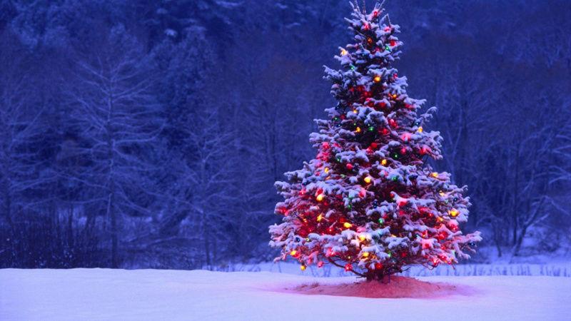 Noël C_tree11
