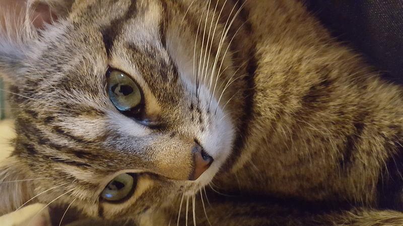 Des chats , encore des chats ^^ 20160410
