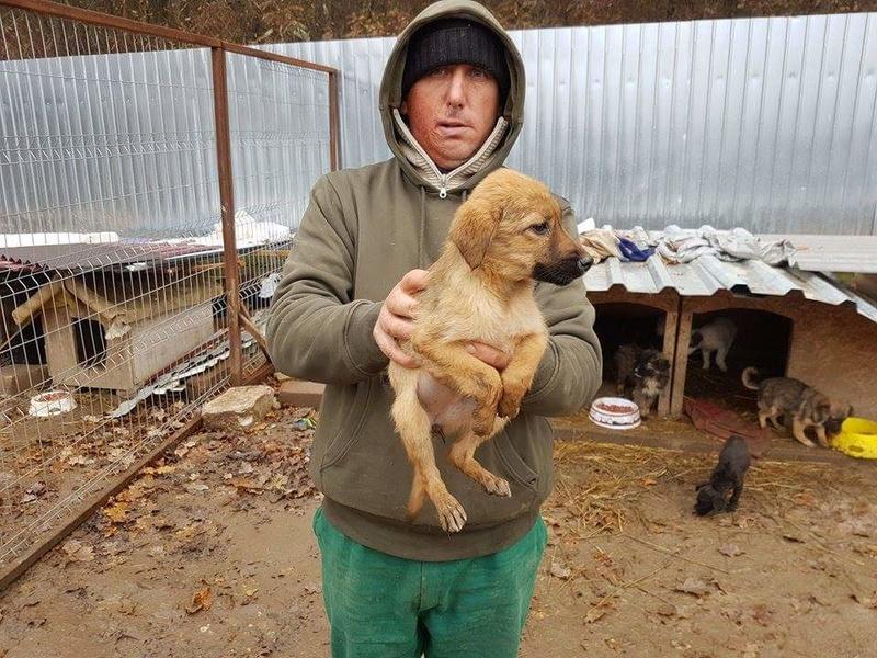 VOLKA - chiot femelle, taille ?, née mi-août 2016 - CHEZ LUCIAN - réservée adoption par Virginie et Amaury (Belgique) - Décédée Receiv52