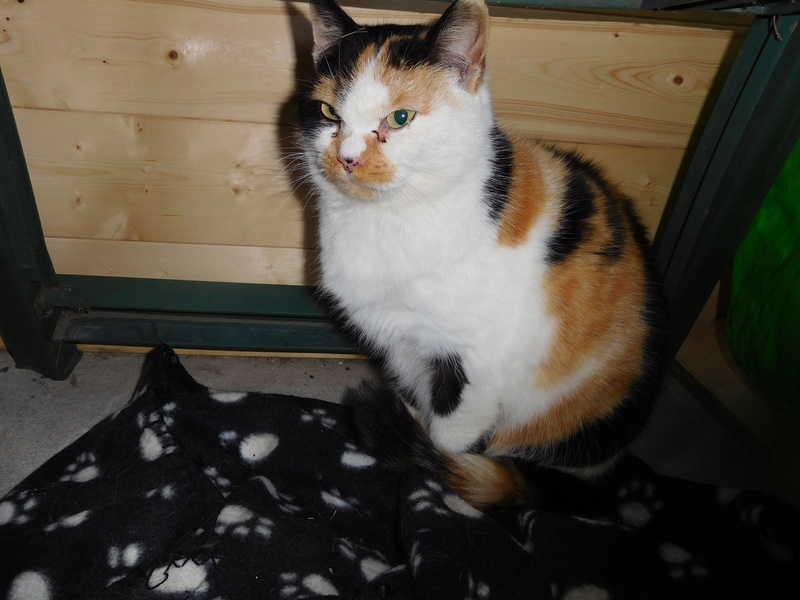 EGLANTINE, née le 01/01/2011 Dscn7018