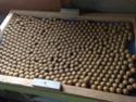 Durée de conservation bouillettes fraîches tel quelle ? Img_1311