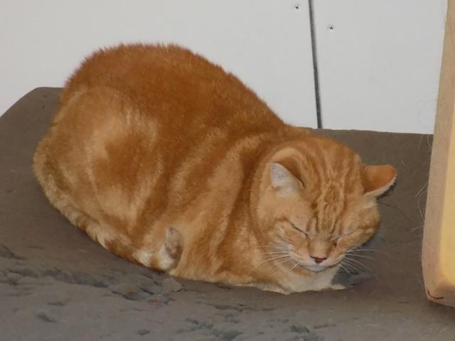 Garfield, Mâle européen (01/01/2007) - FIV+ - Page 7 Dscn6812