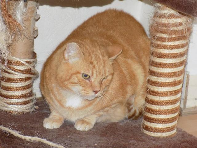 Garfield, Mâle européen (01/01/2007) - FIV+ - Page 7 Dscn6815