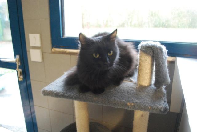 Galerie de chatte noire grand penus