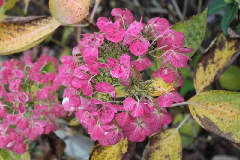 Floraisons de novembre - Page 11 Img_4017