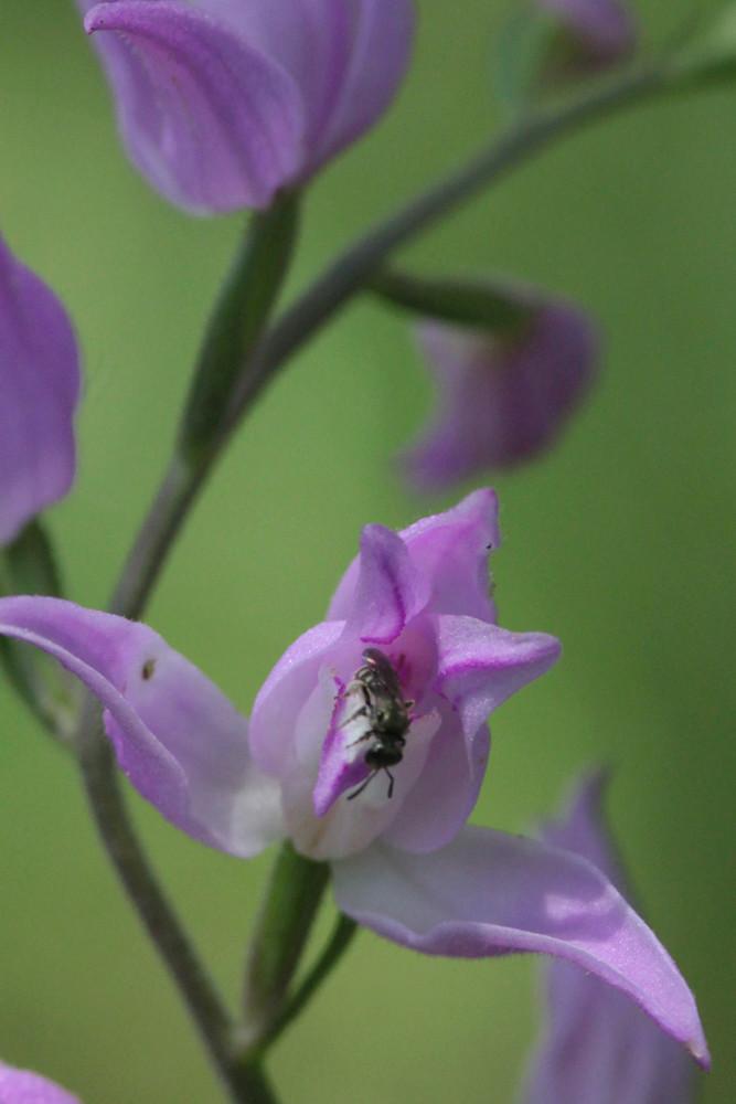 Divers insectes d'été Cepha110