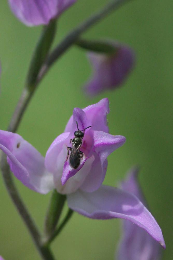 Divers insectes d'été Cepha210