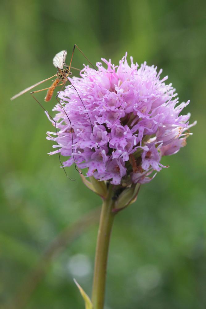 Divers insectes d'été Trauns11