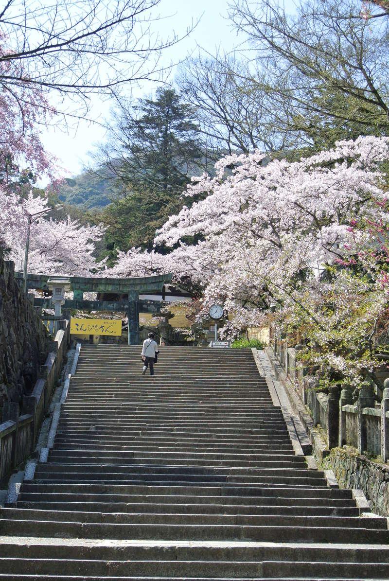 Parfums d'Orient : le Japon - Page 26 Dsc_4813