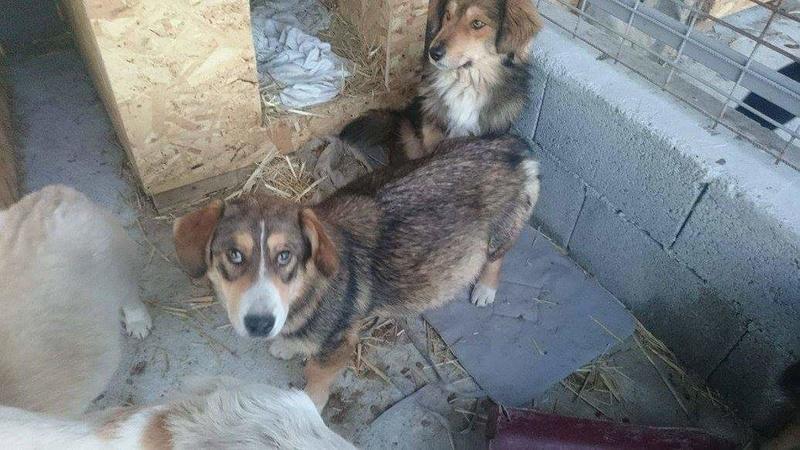 SALLY, F-X, taille petite, née 2014 (TAMARA FOURRIERE) Prise en charge Ferme des Rescapés Fb_im166