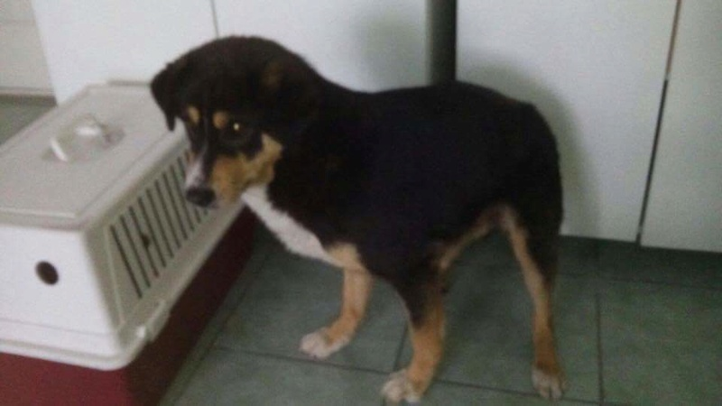 Transfert de 12 chiens de la fourrière de Piatra Neamt vers Timisoara 7 janvier 2017 ? Recei198
