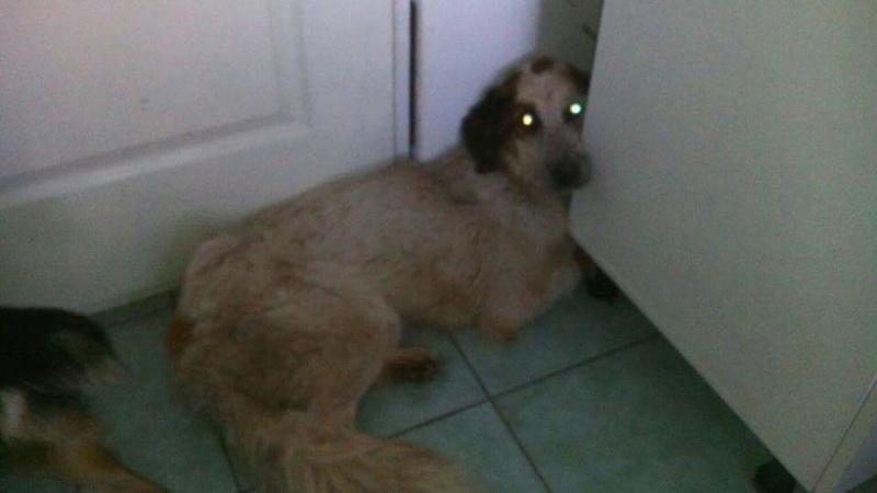 Transfert de 12 chiens de la fourrière de Piatra Neamt vers Timisoara 7 janvier 2017 ? Recei199