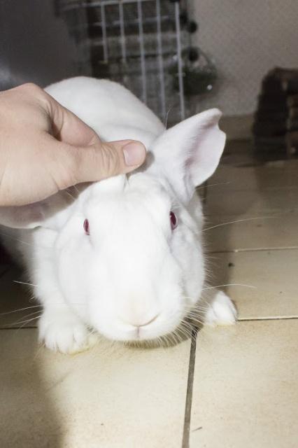 [DECEDE] Django, jeune lapin de laboratoire 24245410