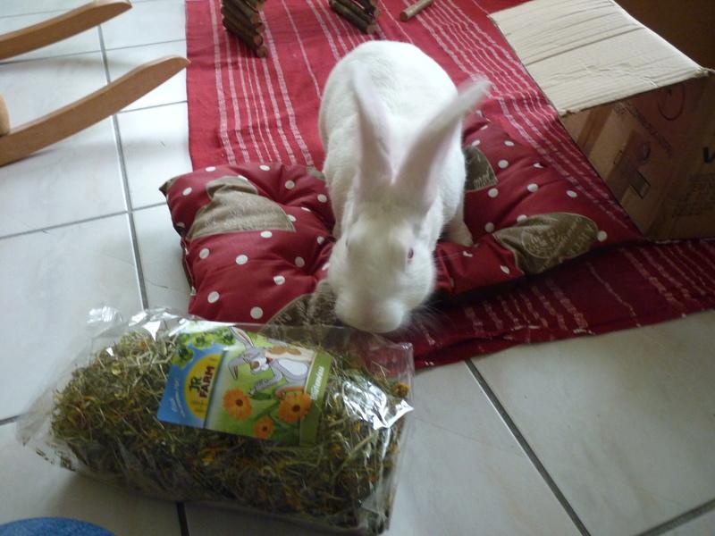 [ADOPTE] Dali, jeune lapin de laboratoire 71344210