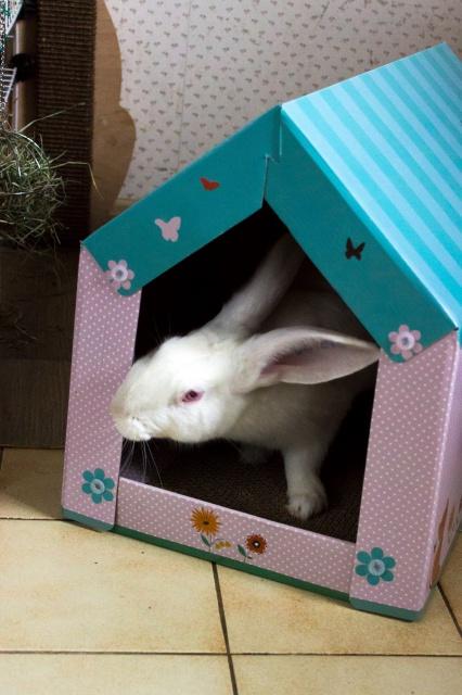 [DECEDE] Django, jeune lapin de laboratoire 87106410