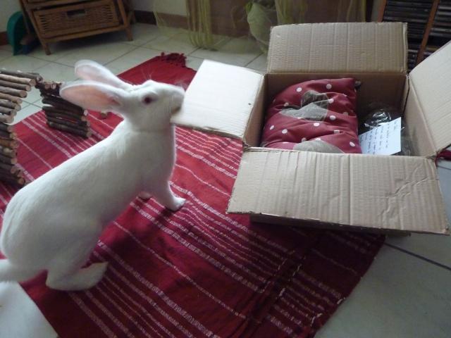[ADOPTE] Dali, jeune lapin de laboratoire 87270610