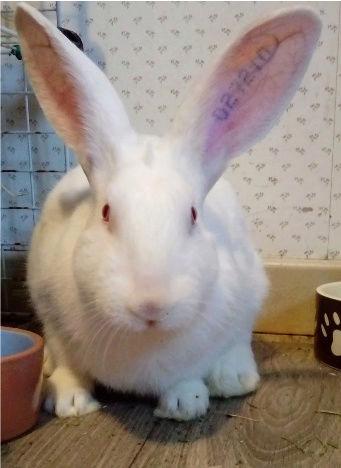 [DECEDE] Django, jeune lapin de laboratoire Django10