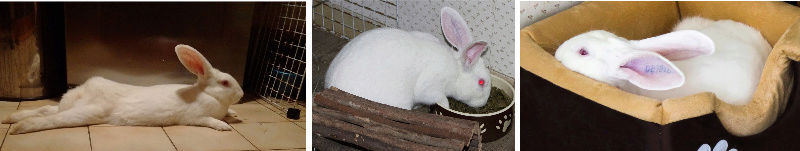 [DECEDE] Django, jeune lapin de laboratoire Django11