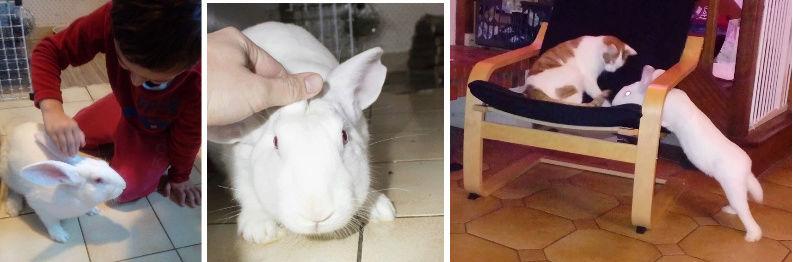 [DECEDE] Django, jeune lapin de laboratoire Django12