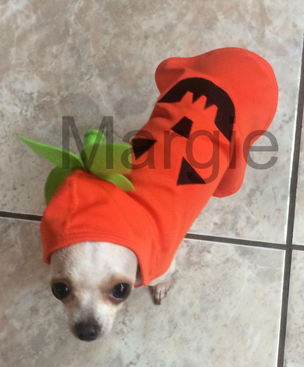 Disfraz de Calabaza para perro Disfra11