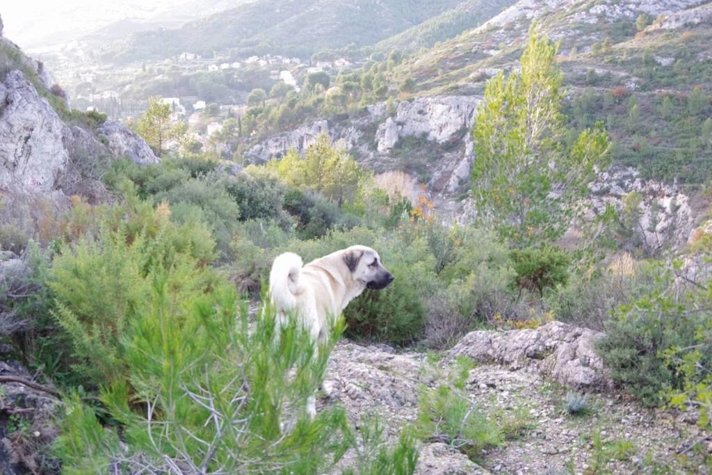 Jolan berger d'anatolie 15259410