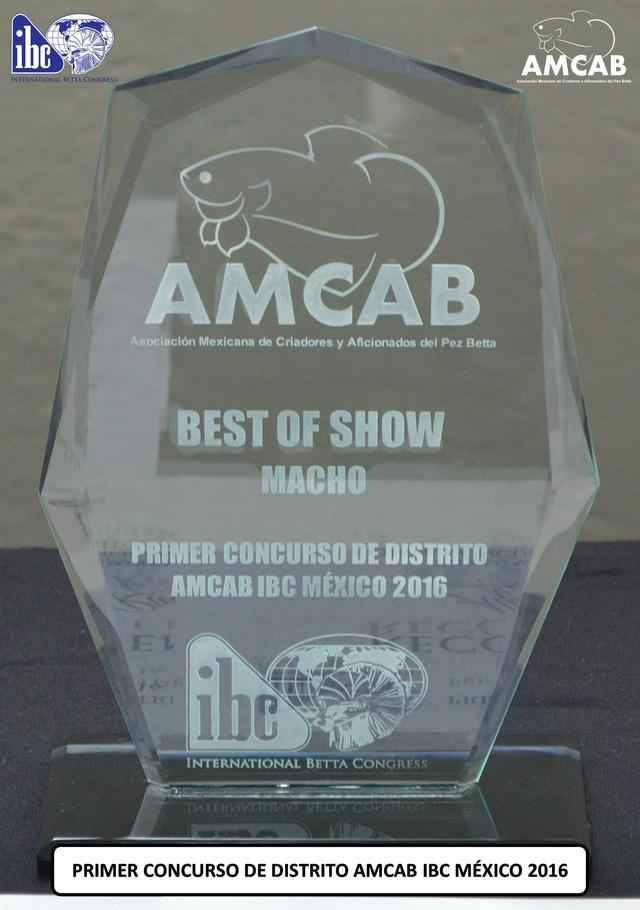 """""""BEST OF SHOW"""" del PRIMER CONCURSO DE DISTRITO AMCAB IBC MÉXICO 2016 Trofeo14"""