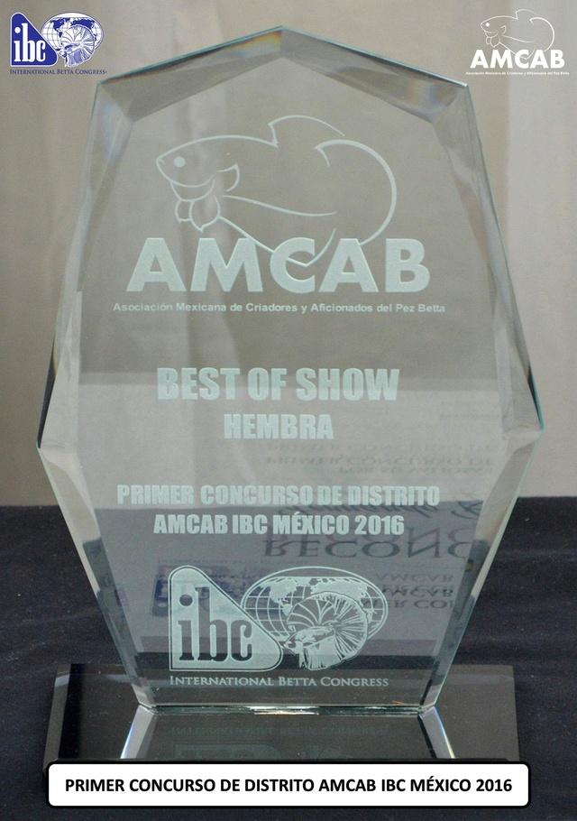 """""""BEST OF SHOW"""" del PRIMER CONCURSO DE DISTRITO AMCAB IBC MÉXICO 2016 Trofeo15"""