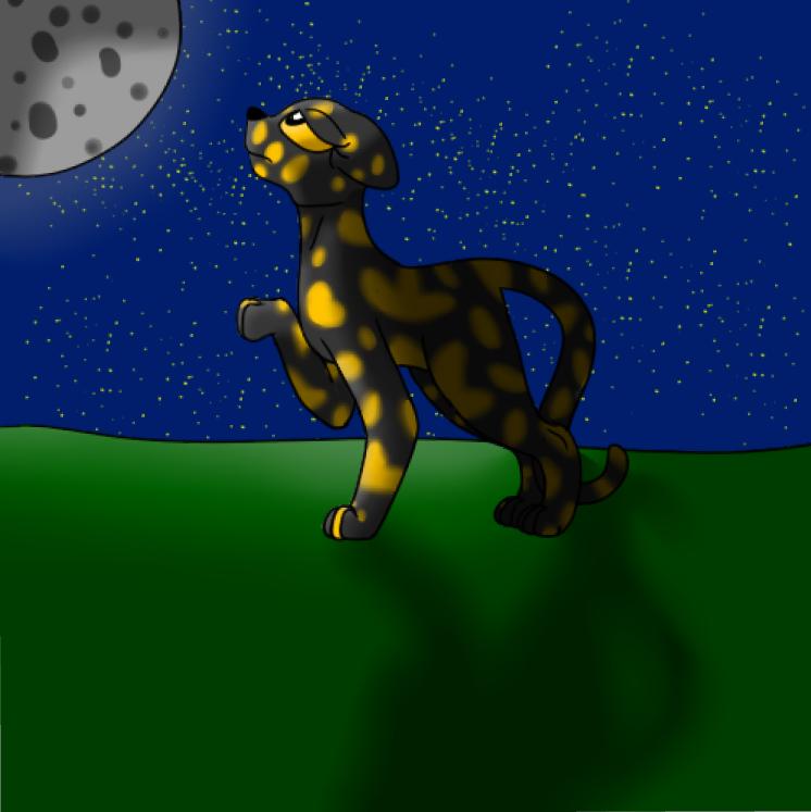 Badger's Cats 2.0 Lark_i12