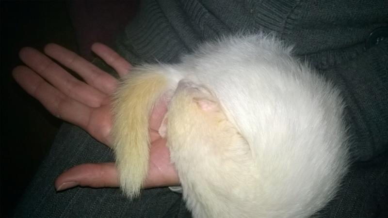 Fleur, femelle albinos - Page 10 Wp_20126