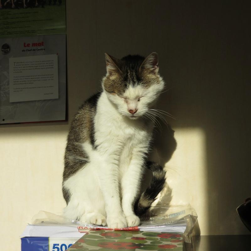 Poussy, femelle marron et blanche née le 1 juin 2002 - Page 4 Img_4416