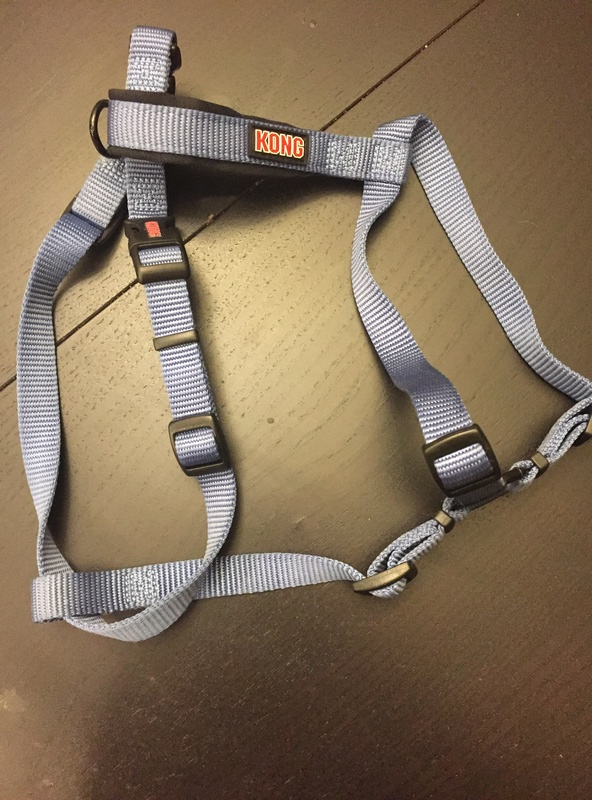 Affordable harnesses for a pulling puppy? Img_3510