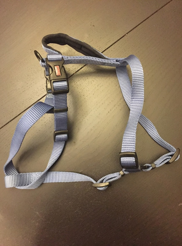 Affordable harnesses for a pulling puppy? Img_3511
