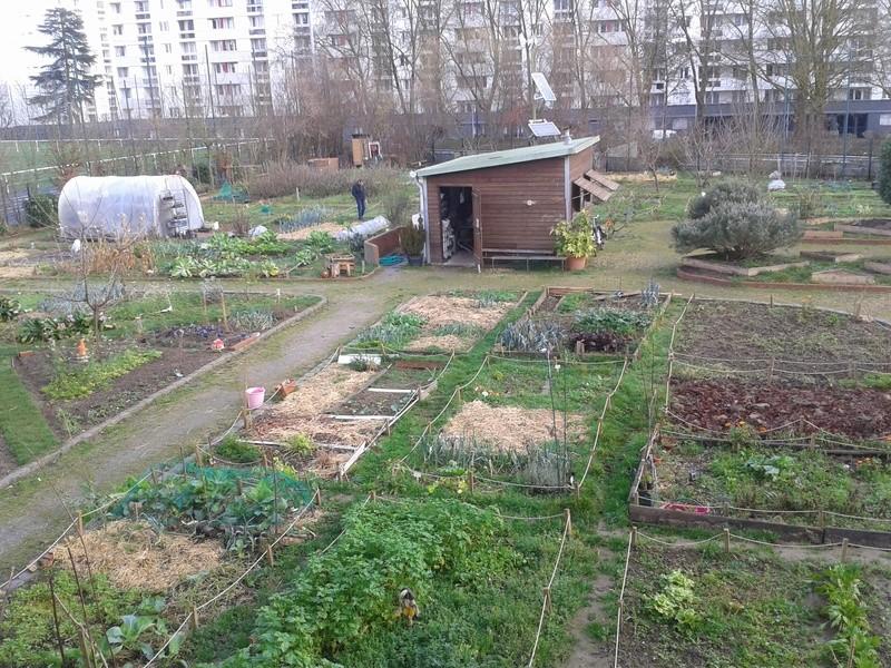 Quelques photos de notre jardin. 20160111