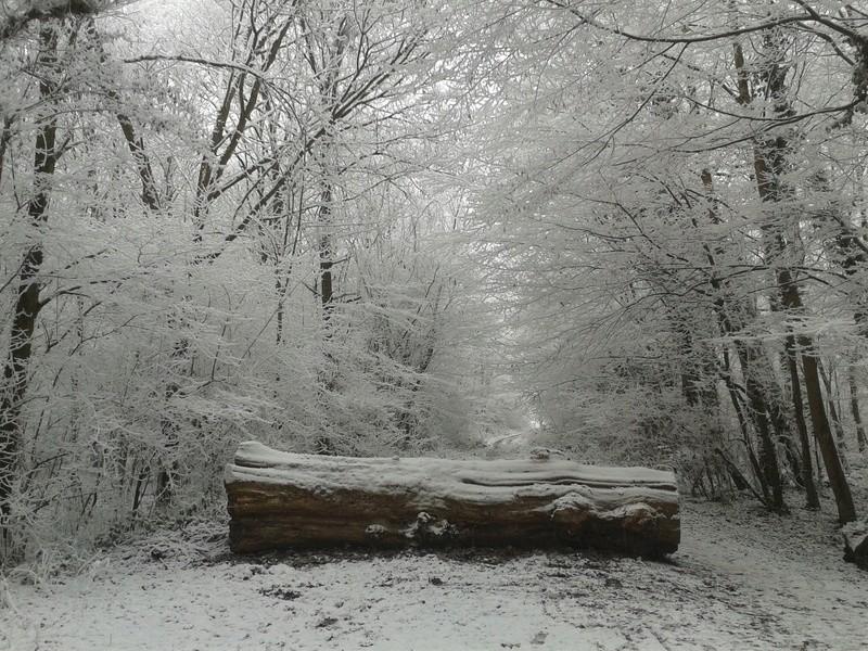 L'hiver à Meudon-la-Forêt 20161217