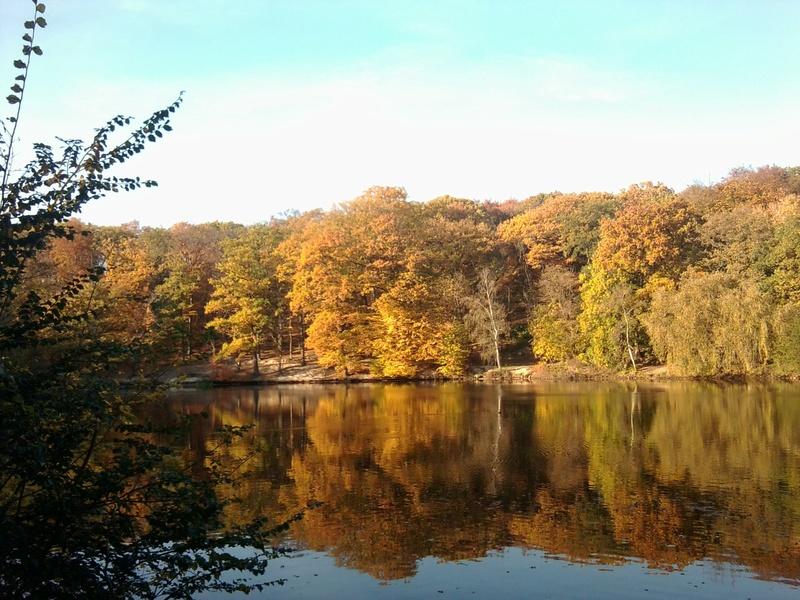 L'automne à Meudon-la-Forêt Automn10