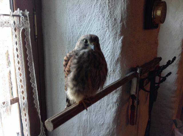 Belles photos d'animaux c'est ici !  - Page 10 Img_0015