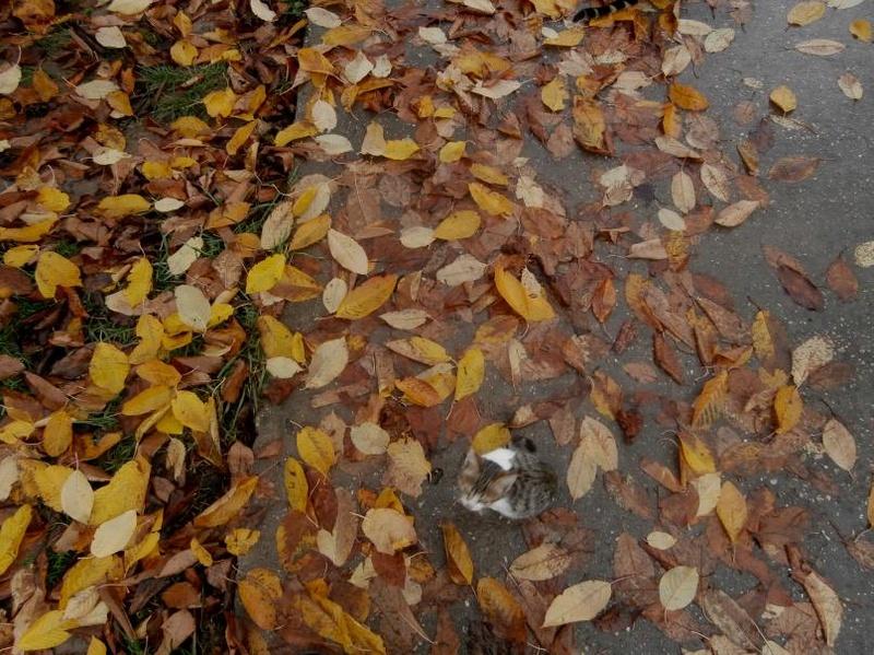 Utjeha kaosa Autumn10