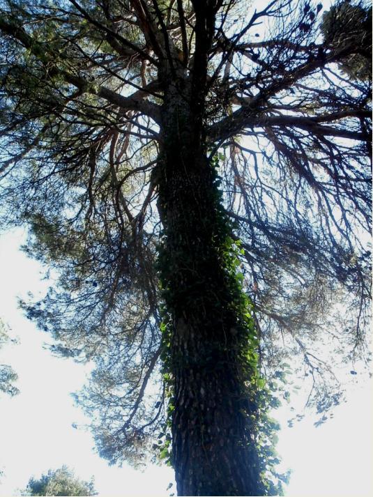 Utjeha kaosa Stablo10