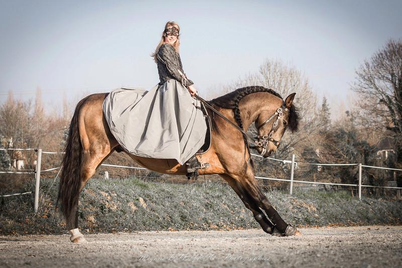 travail de chevaux Img_4011