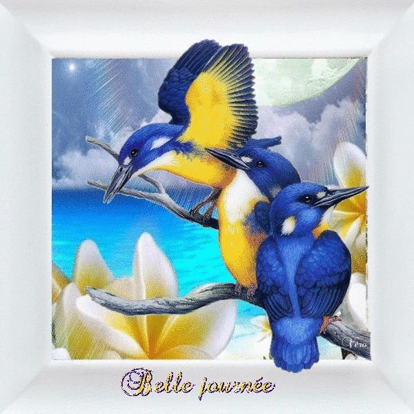 gif  animes  oiseaux Aeba9410