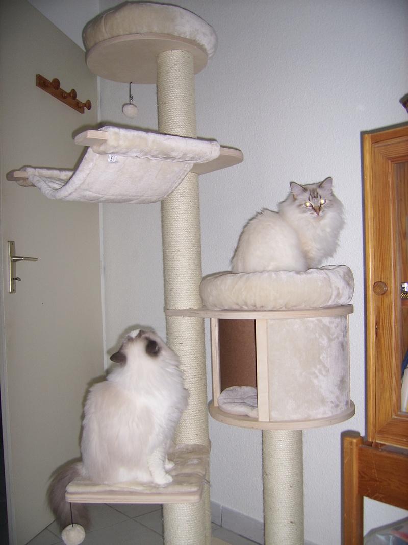 Choix arbre à chat - Page 16 Nov_2011