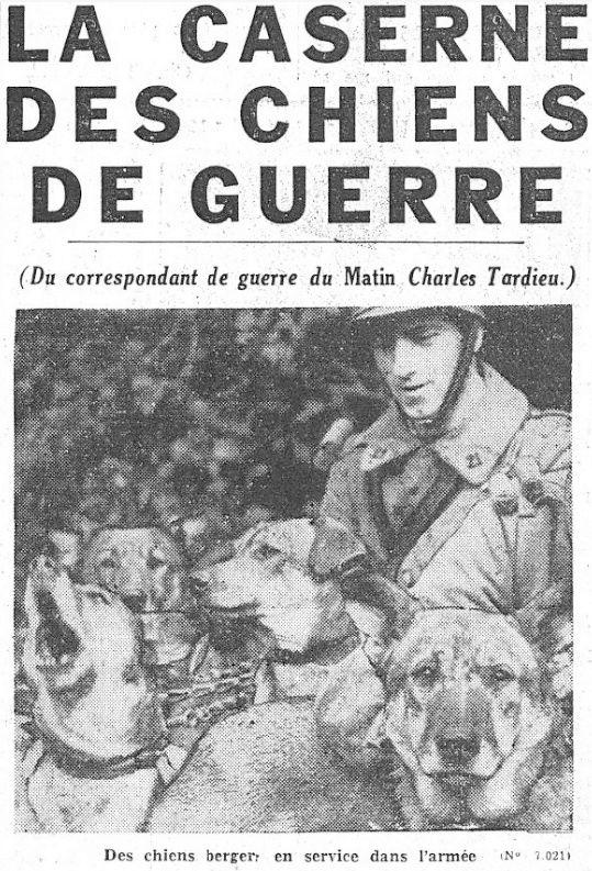 Les chiens dans l'armée française Chiens10