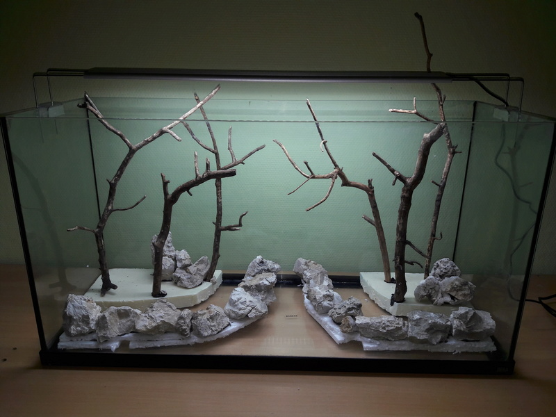 Forest Aquascape 20161215