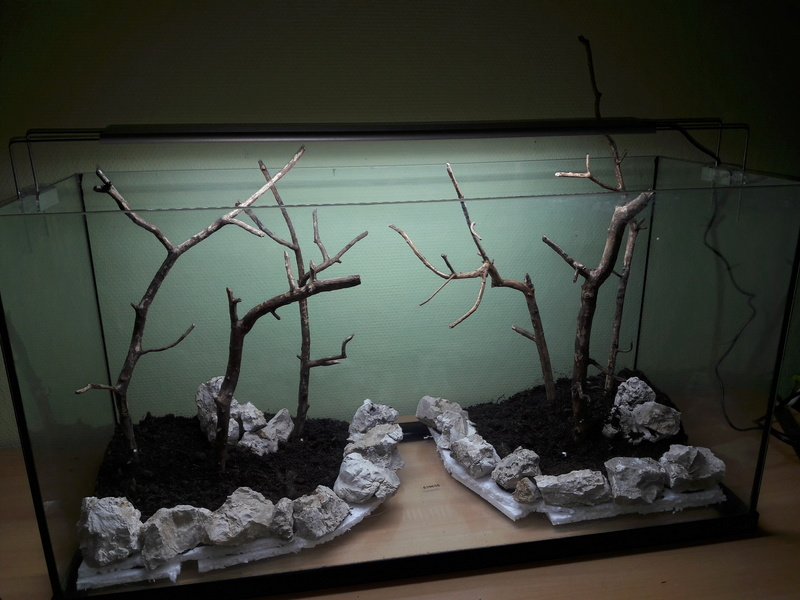 Forest Aquascape 20161216