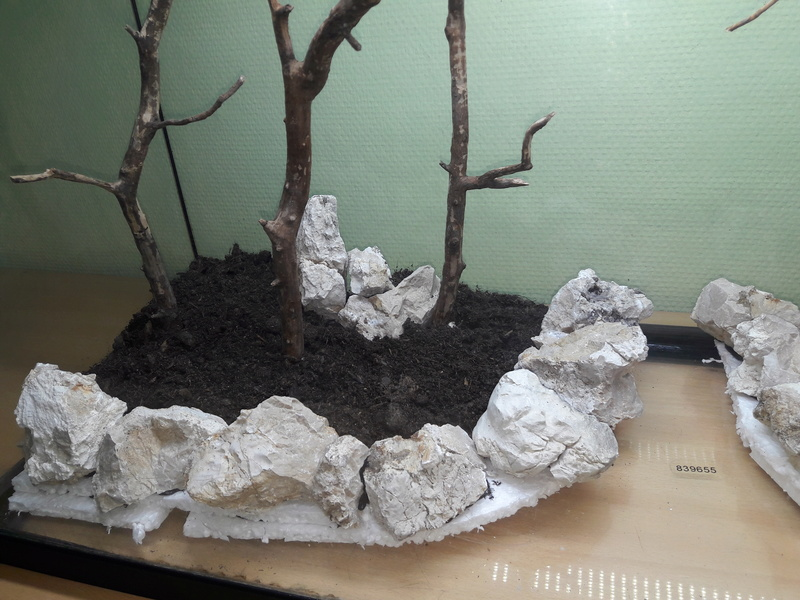 Forest Aquascape 20161218