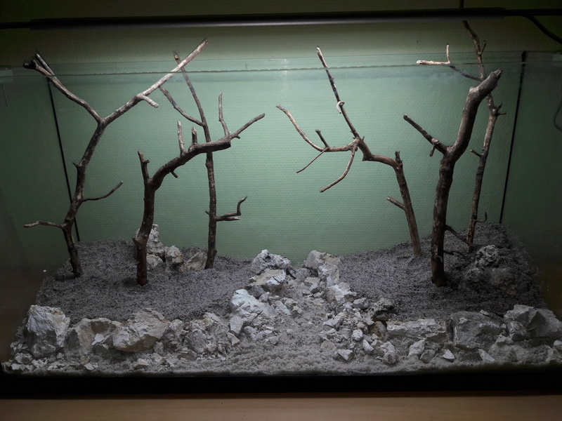 Forest Aquascape 20161219